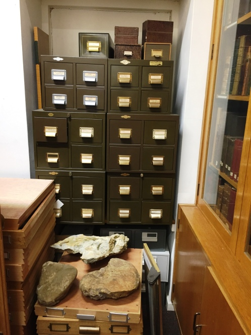 Drawer upon drawer of fossils