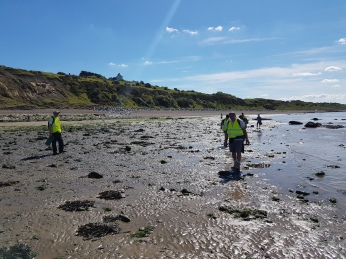 Searching for teeth and other fossils at low tide