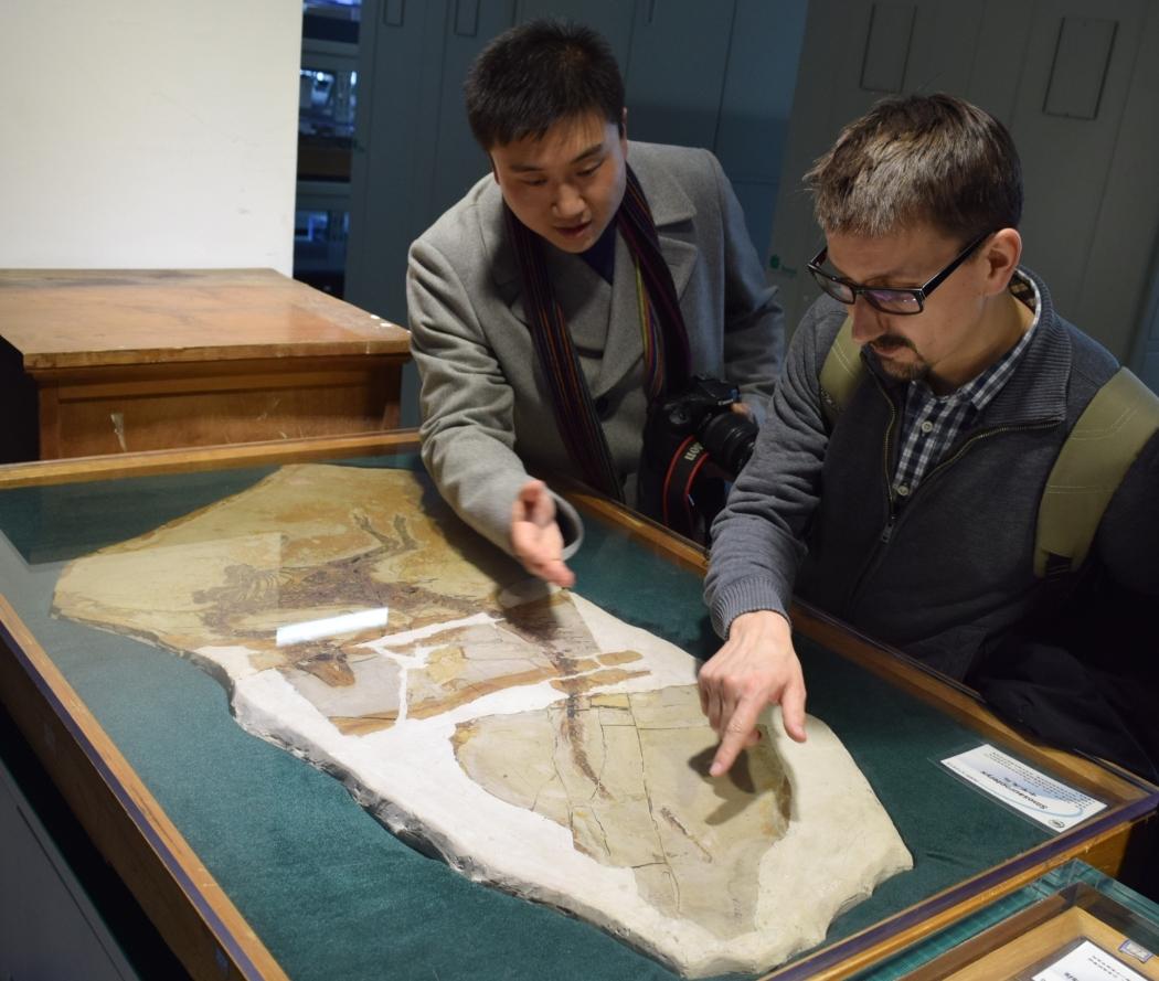Adam Smith and Wang Qi discuss the Sinosauropteryx