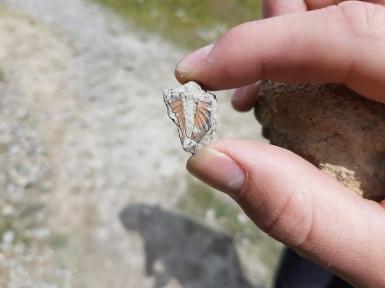 Trilobite found by Vita Murray