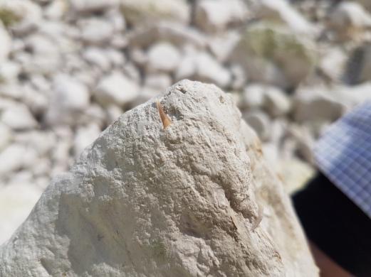 Shark tooth found by Aidan